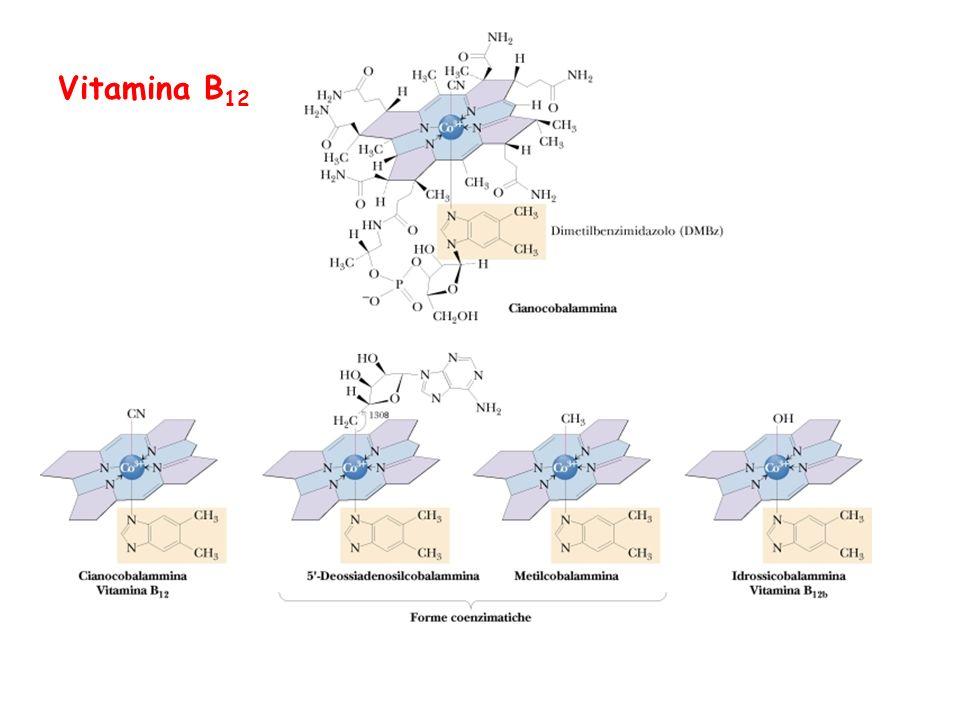 Vitamina B 12