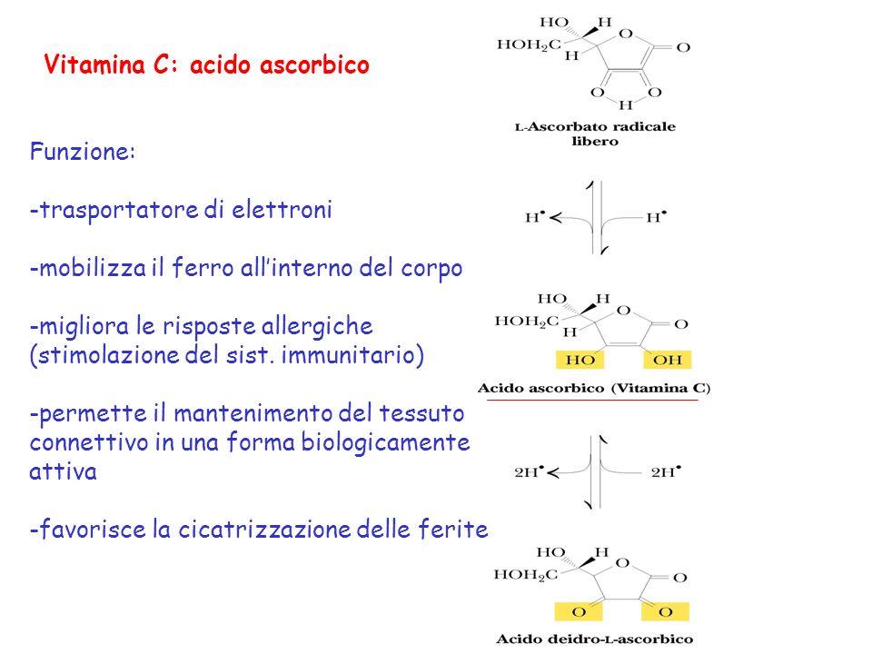 Acido ascorbico= riducente in varie reazioni: -sintesi del collageno (tappa critica per la formazione dellosso) dove è necessario per lidrossilazione di residui di lisina e prolina nel procollageno -degradazione della tirosina -sintesi delle catecolamine -biosintesi degli acidi biliari Fabbisogno giornaliero: 60 mg (nelluomo manca lenzima gluconolattone ossidasi che catalizza lultima reazione della trasformazione del glucosio in ascorbato) Lipovitaminosi C: scorbuto (danni del tessuto connettivo, emorragie e perdita di denti)