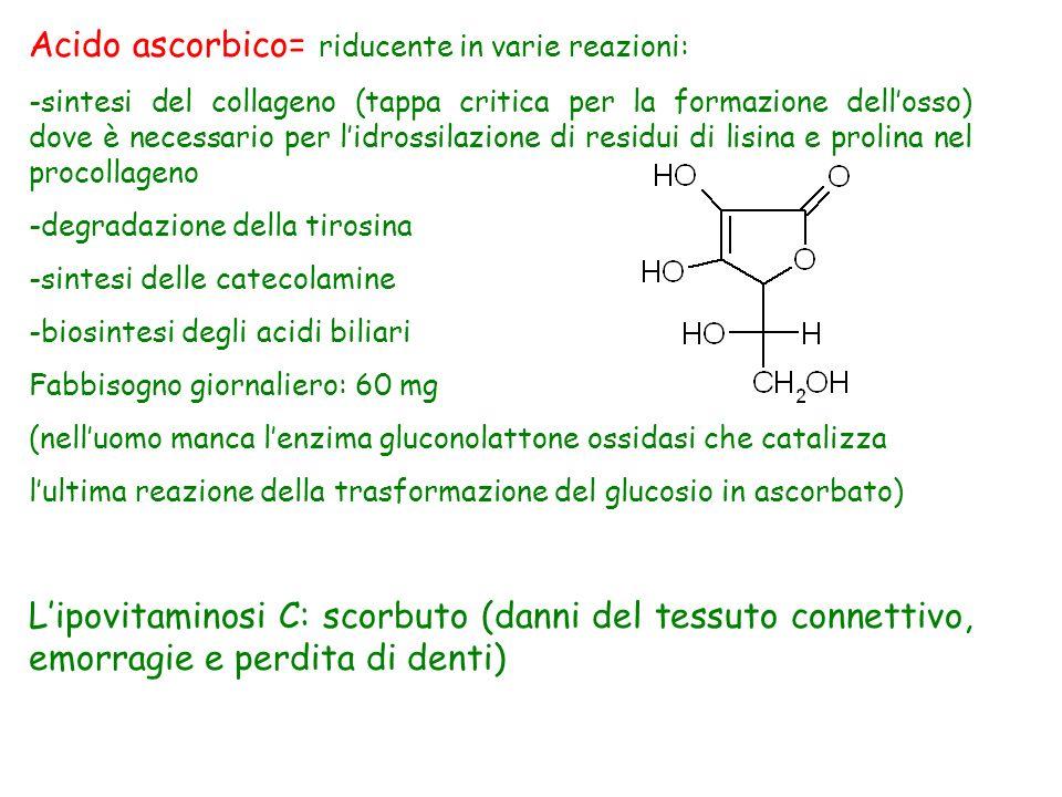 Acido ascorbico= riducente in varie reazioni: -sintesi del collageno (tappa critica per la formazione dellosso) dove è necessario per lidrossilazione