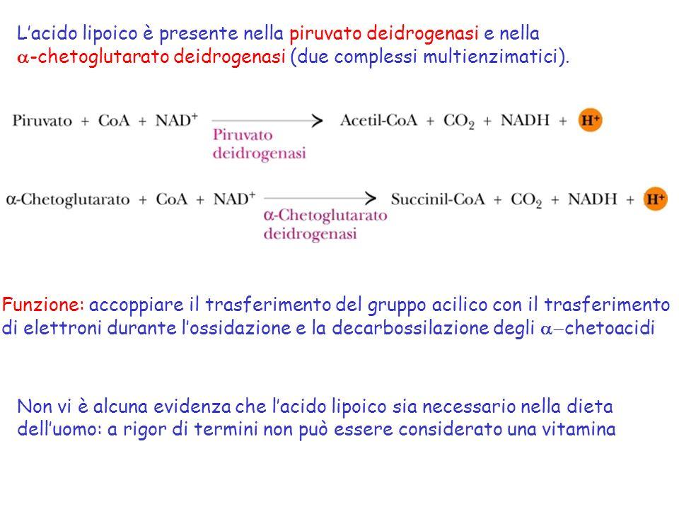Lacido lipoico è presente nella piruvato deidrogenasi e nella -chetoglutarato deidrogenasi (due complessi multienzimatici). Funzione: accoppiare il tr