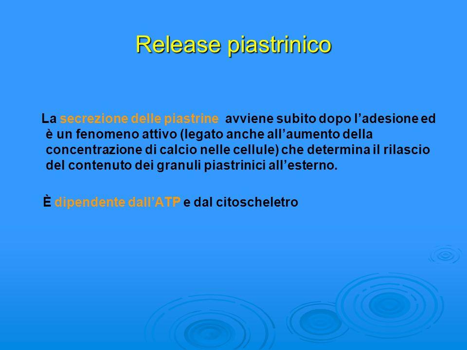 Release piastrinico La secrezione delle piastrine avviene subito dopo ladesione ed è un fenomeno attivo (legato anche allaumento della concentrazione