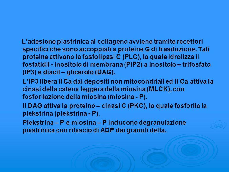 Ladesione piastrinica al collageno avviene tramite recettori specifici che sono accoppiati a proteine G di trasduzione. Tali proteine attivano la fosf
