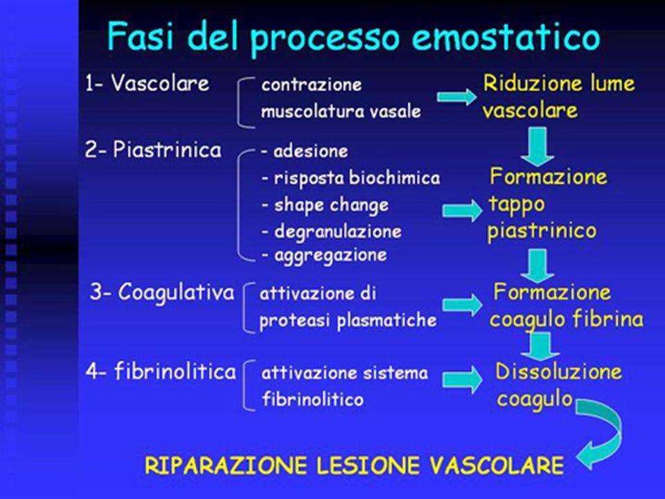 Fibrinolisi Plasminogeno convertito a plasmina Plasmina degrada la fibrina Rilascio di fattori della degradazione Plasmina è inattivata da inibitori in circolazione