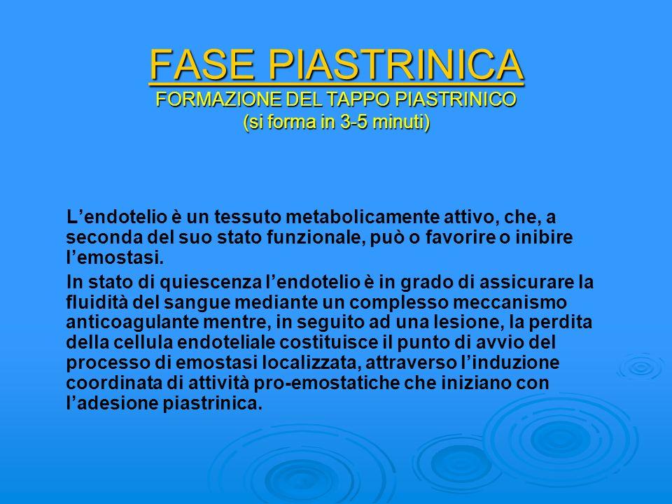 FASE PIASTRINICA FORMAZIONE DEL TAPPO PIASTRINICO (si forma in 3-5 minuti) Lendotelio è un tessuto metabolicamente attivo, che, a seconda del suo stat