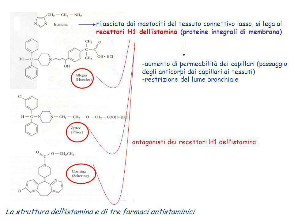 La struttura dellistamina e di tre farmaci antistaminici rilasciata dai mastociti del tessuto connettivo lasso, si lega ai recettori H1 dellistamina (