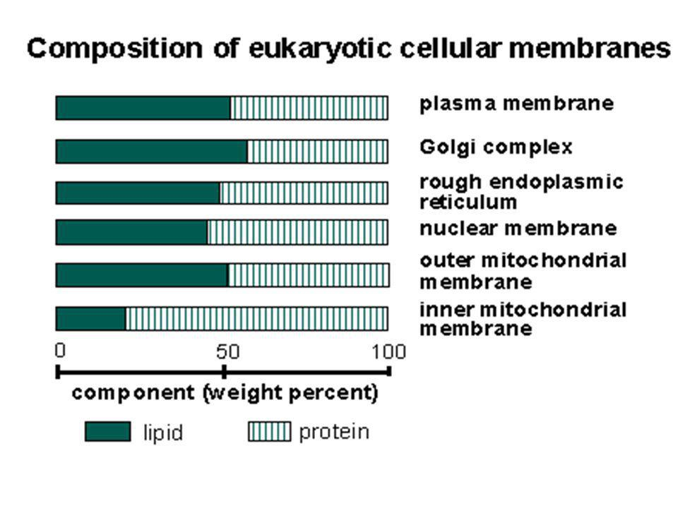 I fosfolipidi sono disposti in maniera asimmetrica nella maggior parte delle membrane Membrana degli eritrociti umani La carica totale sulla superficie esterna ed interna di una membrana dipende dalla distribuzione dei lipidi.