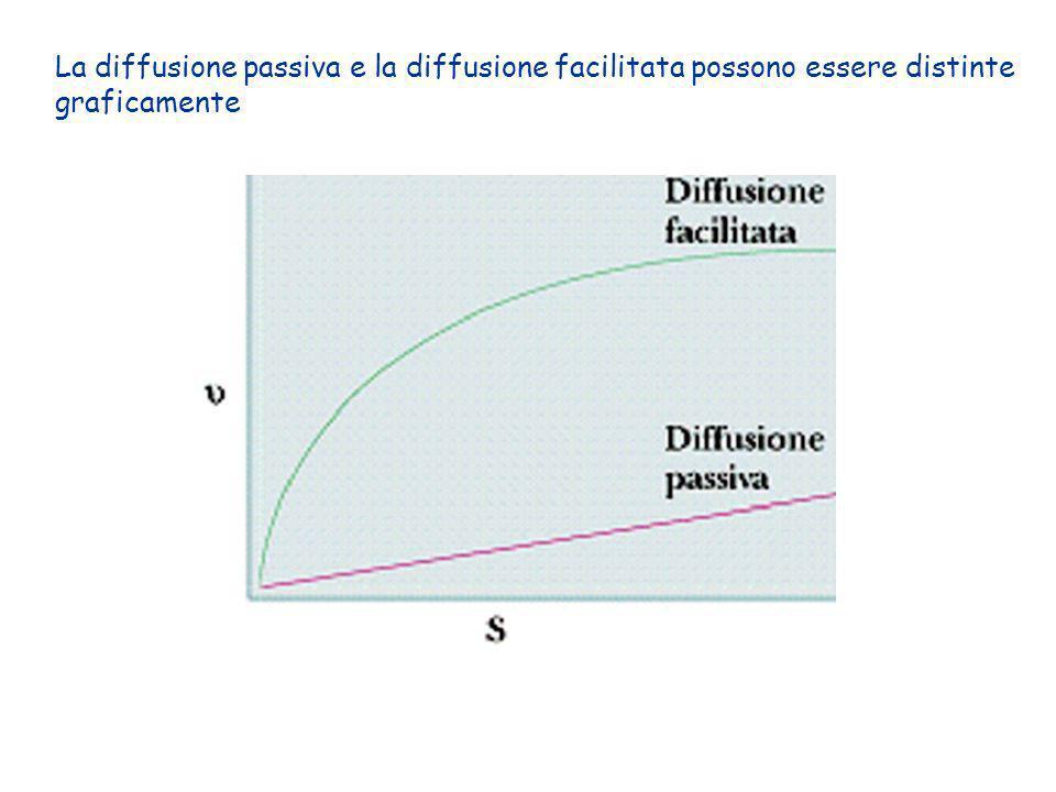 La diffusione passiva e la diffusione facilitata possono essere distinte graficamente