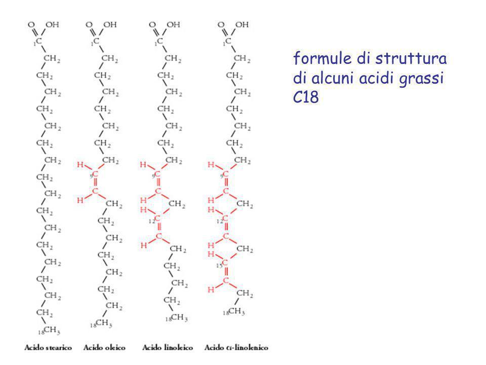 formule di struttura di alcuni acidi grassi C18