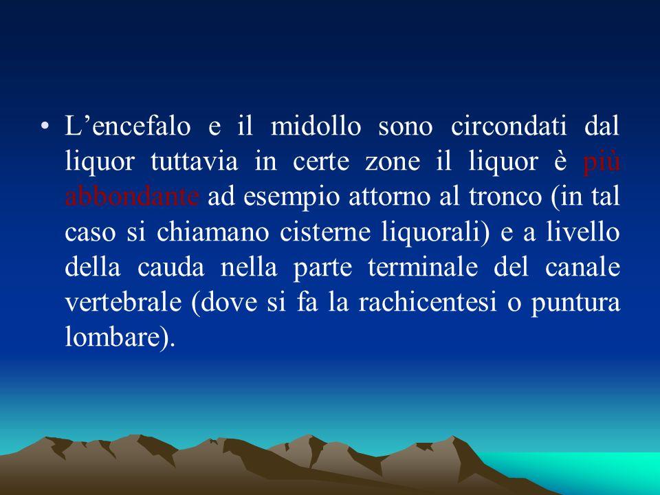 Lencefalo e il midollo sono circondati dal liquor tuttavia in certe zone il liquor è più abbondante ad esempio attorno al tronco (in tal caso si chiam