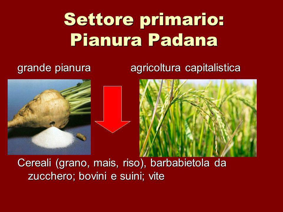 Settore primario: Pianura Padana grande pianuraagricoltura capitalistica Cereali (grano, mais, riso), barbabietola da zucchero; bovini e suini; vite