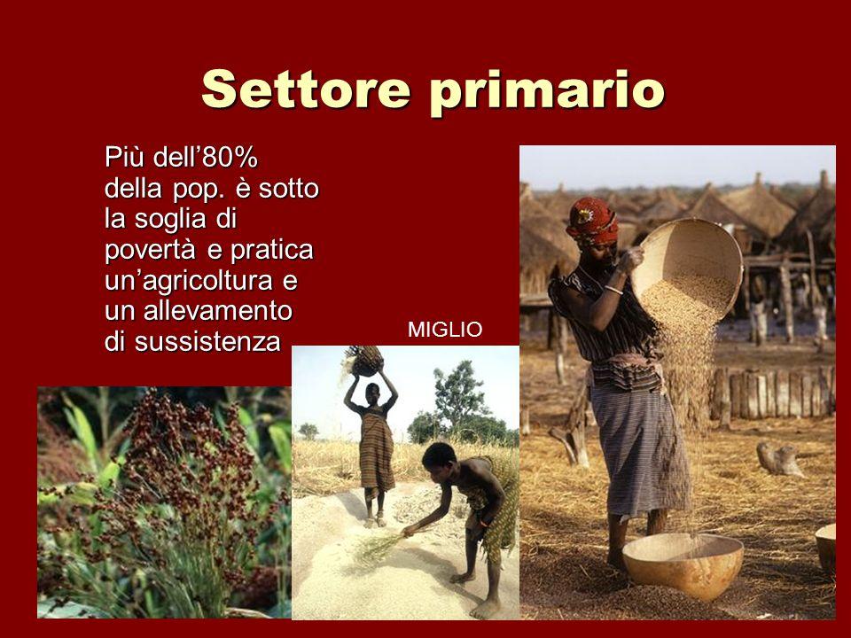 Settore primario Più dell80% della pop. è sotto la soglia di povertà e pratica unagricoltura e un allevamento di sussistenza MIGLIO