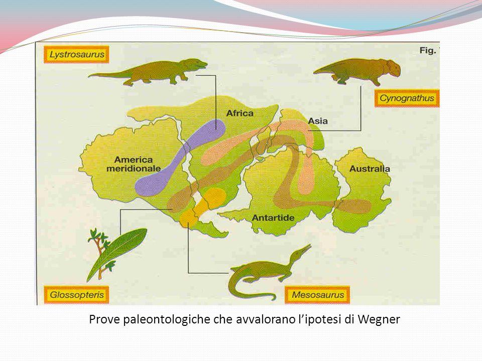 Prove paleontologiche che avvalorano lipotesi di Wegner