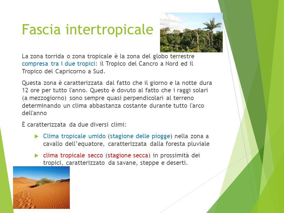 Fascia intertropicale La zona torrida o zona tropicale è la zona del globo terrestre compresa tra i due tropici: il Tropico del Cancro a Nord ed il Tr