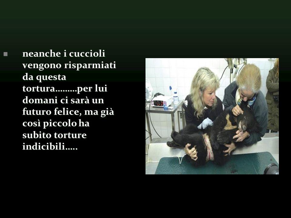 neanche i cuccioli vengono risparmiati da questa tortura………per lui domani ci sarà un futuro felice, ma già così piccolo ha subito torture indicibili…..
