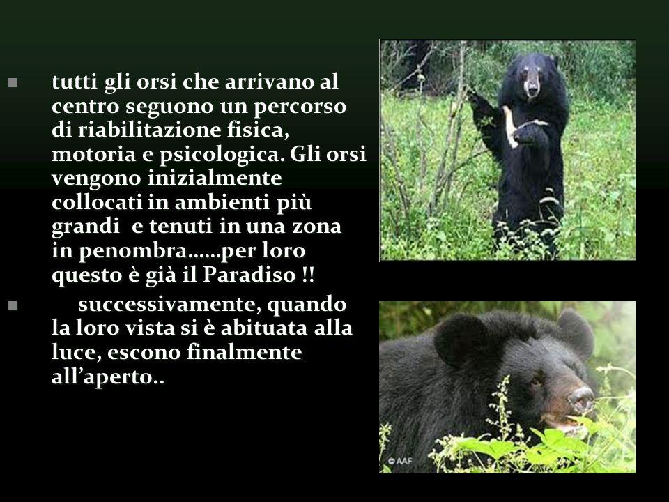 tutti gli orsi che arrivano al centro seguono un percorso di riabilitazione fisica, motoria e psicologica.
