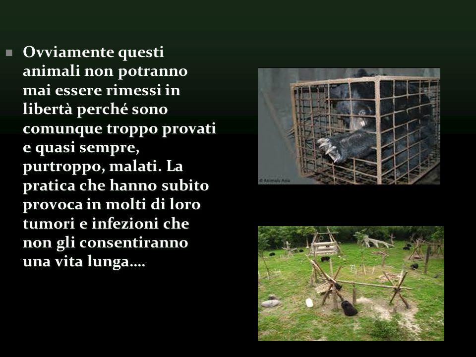Ovviamente questi animali non potranno mai essere rimessi in libertà perché sono comunque troppo provati e quasi sempre, purtroppo, malati.