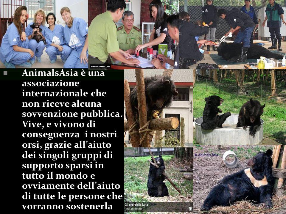 AnimalsAsia è una associazione internazionale che non riceve alcuna sovvenzione pubblica.