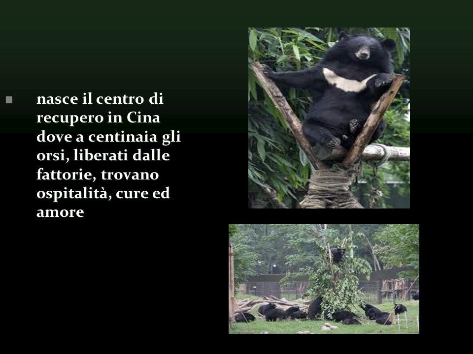 nasce il centro di recupero in Cina dove a centinaia gli orsi, liberati dalle fattorie, trovano ospitalità, cure ed amore nasce il centro di recupero in Cina dove a centinaia gli orsi, liberati dalle fattorie, trovano ospitalità, cure ed amore
