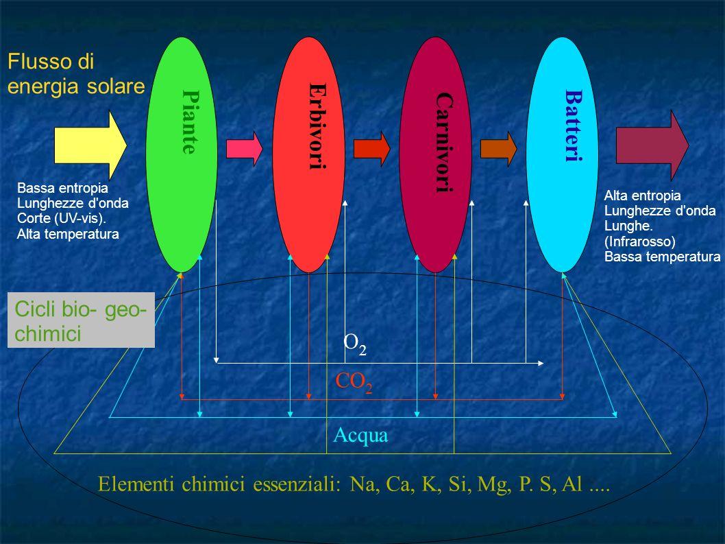 Piante Erbivori Carnivori Batteri CO 2 Acqua Elementi chimici essenziali: Na, Ca, K, Si, Mg, P. S, Al.... O2O2 Flusso di energia solare Cicli bio- geo