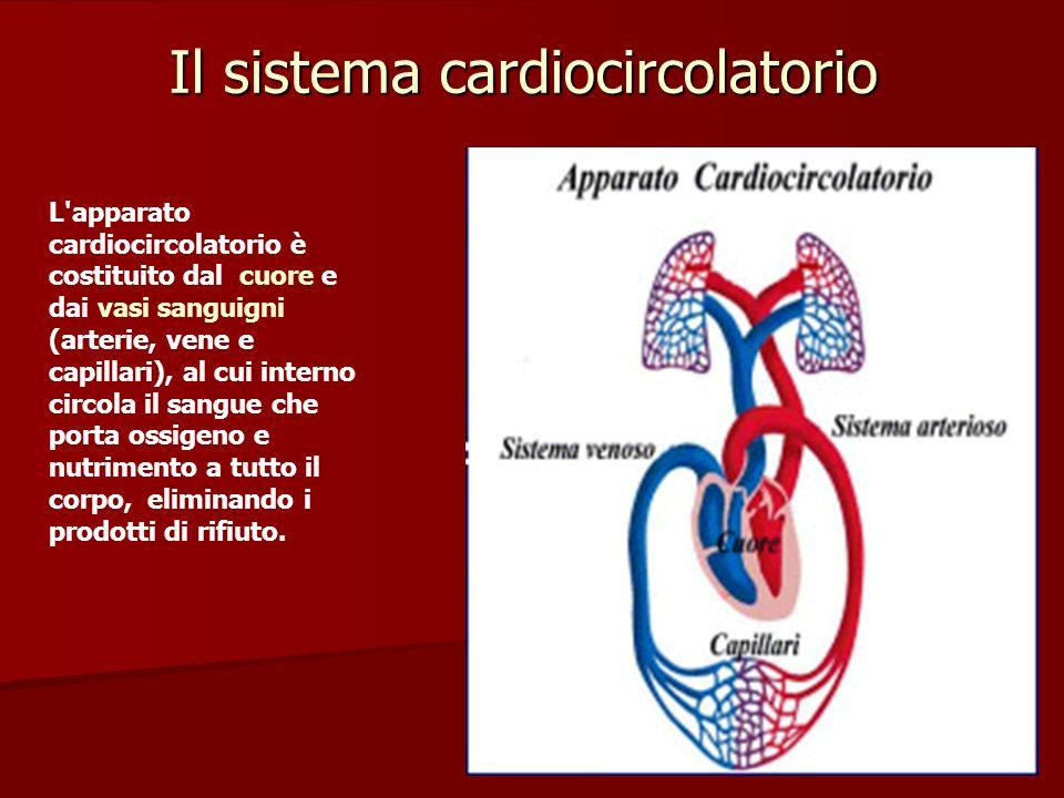 Il CUORE è un organo cavo, dotato di un tipo di muscolatura particolare, situato nel torace tra i due polmoni.