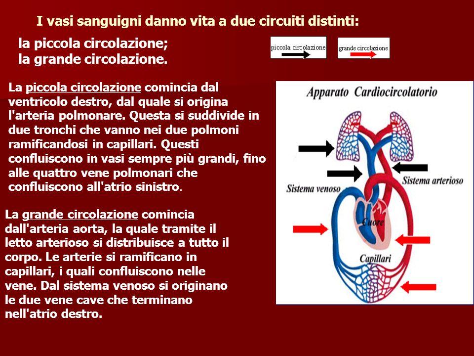 Patologie dei vasi sanguigni Colesterolo:le persone con quantità eccessive di colesterolo nel sangue hanno alte probabilità di avere attacchi cardiaci.