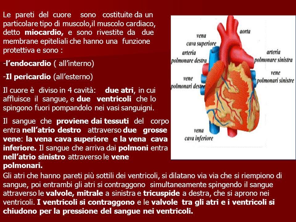 Le pareti del cuore sono costituite da un particolare tipo di muscolo,il muscolo cardiaco, detto miocardio, e sono rivestite da due membrane epitelial