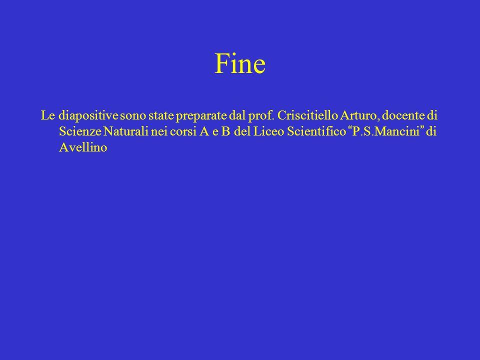 Fine Le diapositive sono state preparate dal prof. Criscitiello Arturo, docente di Scienze Naturali nei corsi A e B del Liceo Scientifico P.S.Mancini