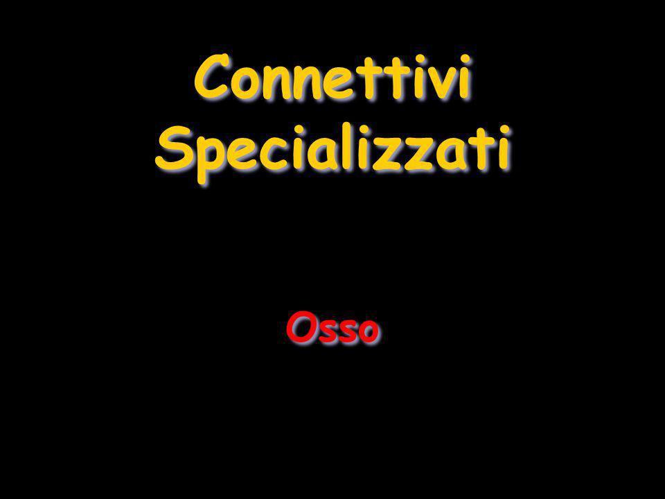 Connettivi Specializzati Osso Connettivi Specializzati Osso