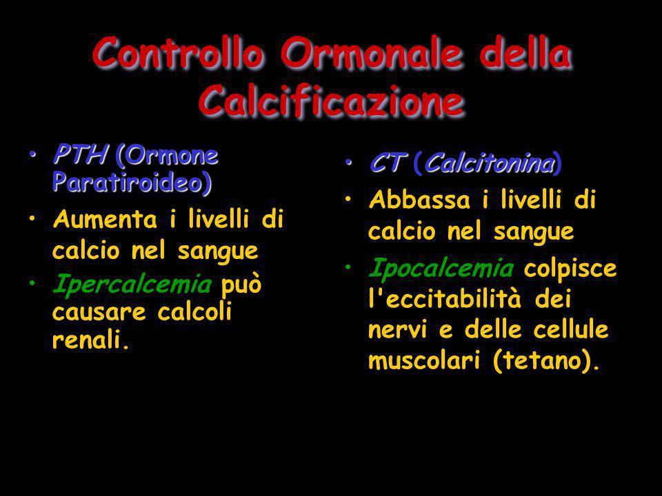 Controllo Ormonale della Calcificazione PTH(Ormone Paratiroideo)PTH (Ormone Paratiroideo) Aumenta i livelli di calcio nel sangue Ipercalcemia può caus