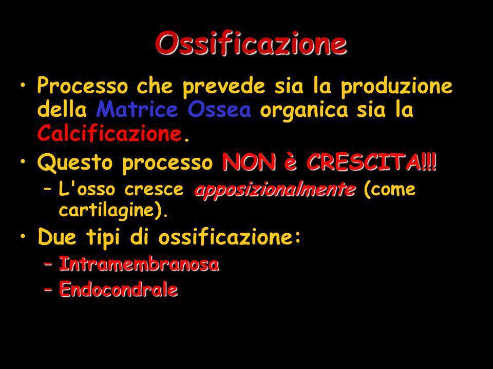 Ossificazione Processo che prevede sia la produzione della Matrice Ossea organica sia la Calcificazione. NON è CRESCITA!!!Questo processo NON è CRESCI