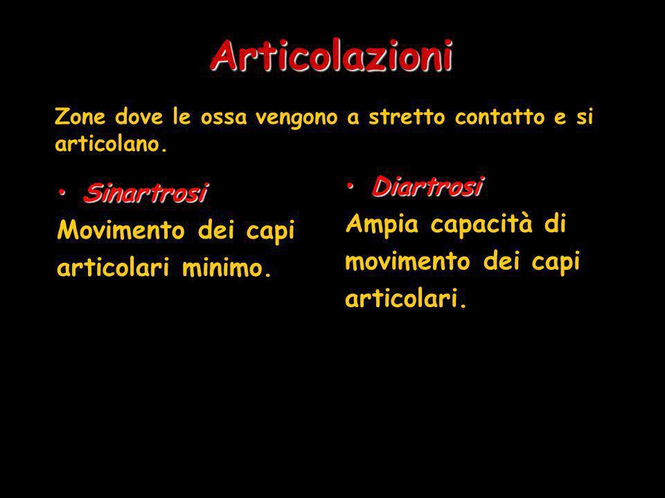Articolazioni SinartrosiSinartrosi Movimento dei capi articolari minimo. DiartrosiDiartrosi Ampia capacità di movimento dei capi articolari. Zone dove