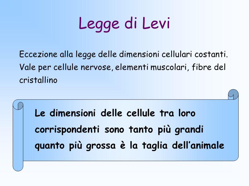 Legge di Levi Le dimensioni delle cellule tra loro corrispondenti sono tanto più grandi quanto più grossa è la taglia dellanimale Eccezione alla legge