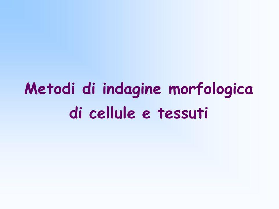 Metodi di indagine morfologica di cellule e tessuti