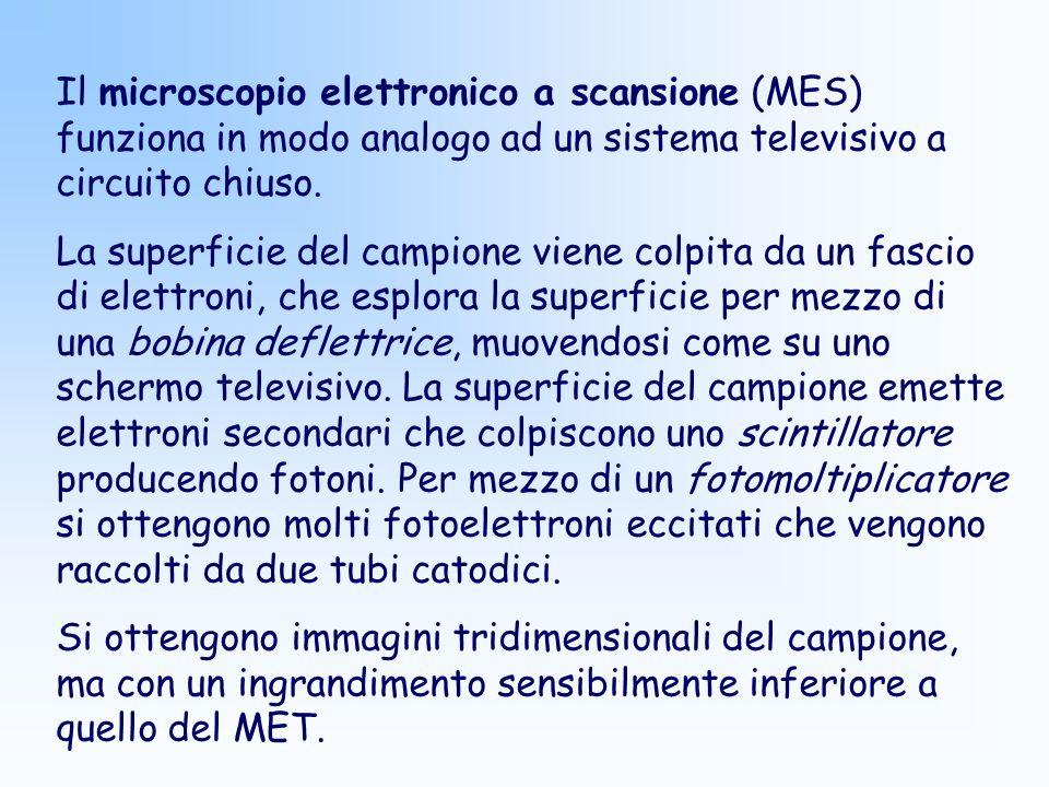 Il microscopio elettronico a scansione (MES) funziona in modo analogo ad un sistema televisivo a circuito chiuso. La superficie del campione viene col