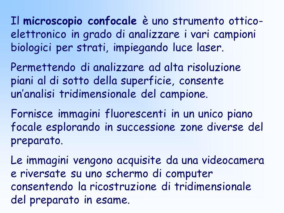 Il microscopio confocale è uno strumento ottico- elettronico in grado di analizzare i vari campioni biologici per strati, impiegando luce laser. Perme