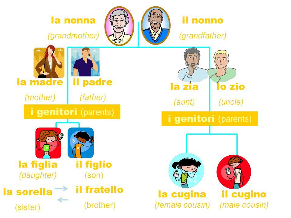 la madre (mother) il nonno (grandfather) la nonna (grandmother) la zia (aunt) lo zio (uncle) il padre (father) la cugina (female cousin) il cugino (male cousin) la figlia (daughter) il figlio (son) la sorella (sister) il fratello (brother) i genitori ( parents) i genitori ( parents)