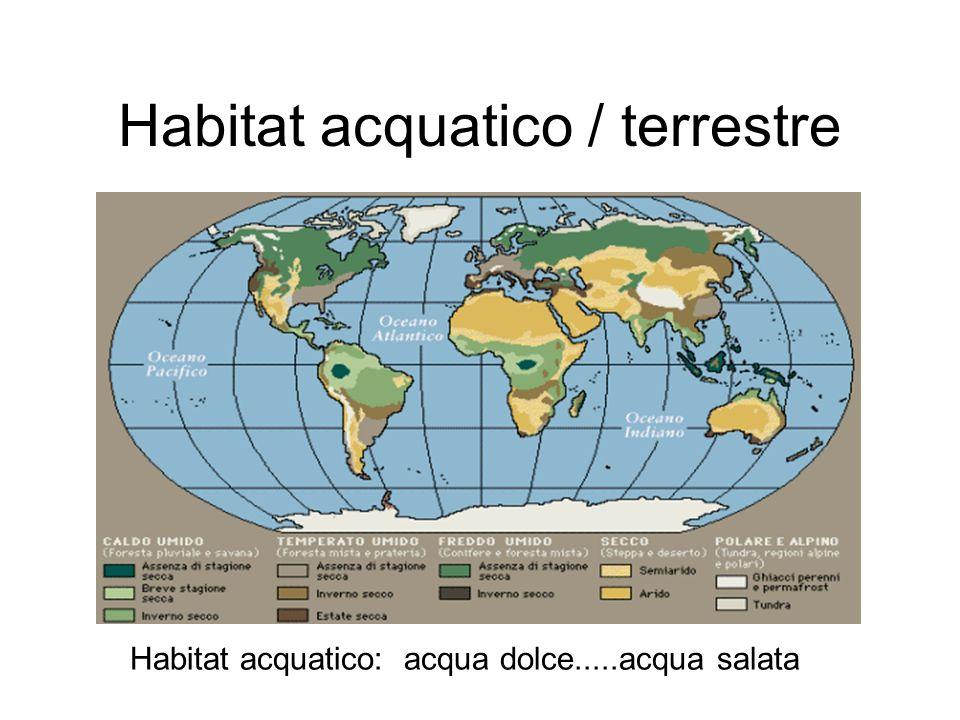 Habitat acquatico / terrestre Habitat acquatico: acqua dolce.....acqua salata