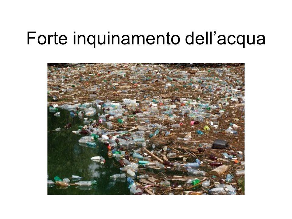 Forte inquinamento dellacqua