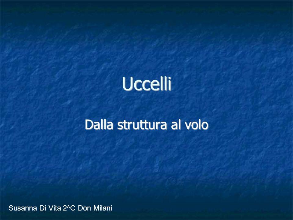 Uccelli Dalla struttura al volo Susanna Di Vita 2^C Don Milani