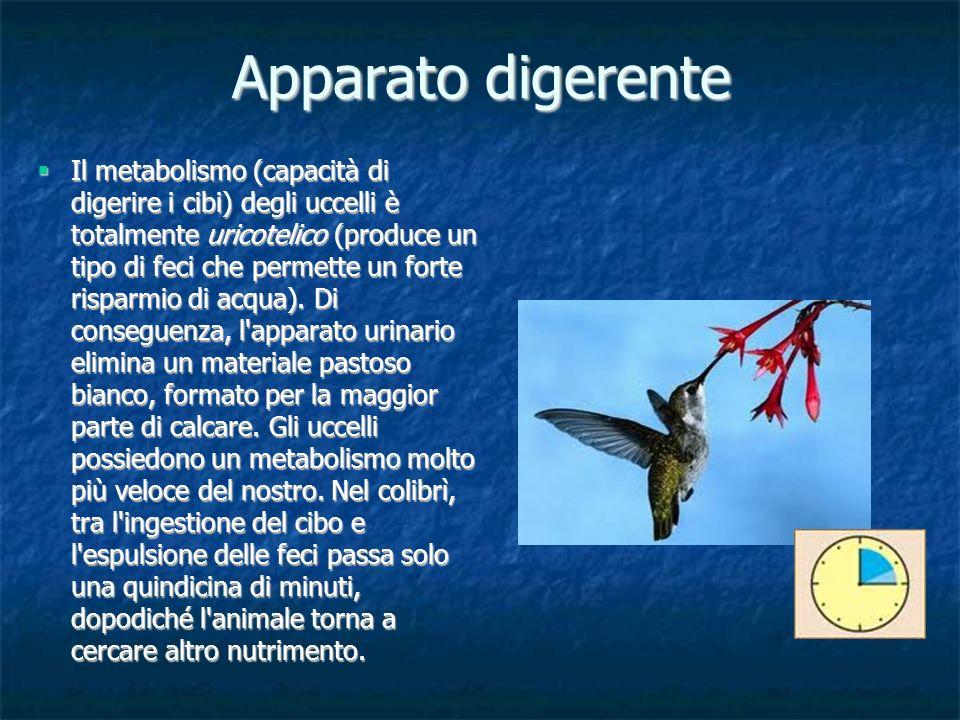 Il metabolismo (capacità di digerire i cibi) degli uccelli è totalmente uricotelico (produce un tipo di feci che permette un forte risparmio di acqua)