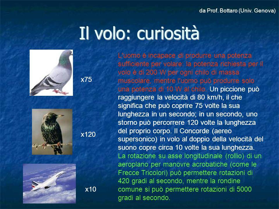 Il volo: curiosità L'uomo è incapace di produrre una potenza sufficiente per volare: la potenza richiesta per il volo è di 200 W per ogni chilo di mas