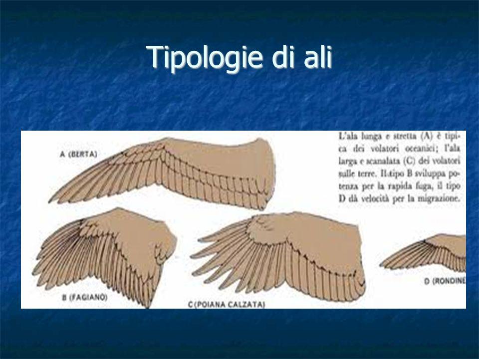 Tipologie di ali