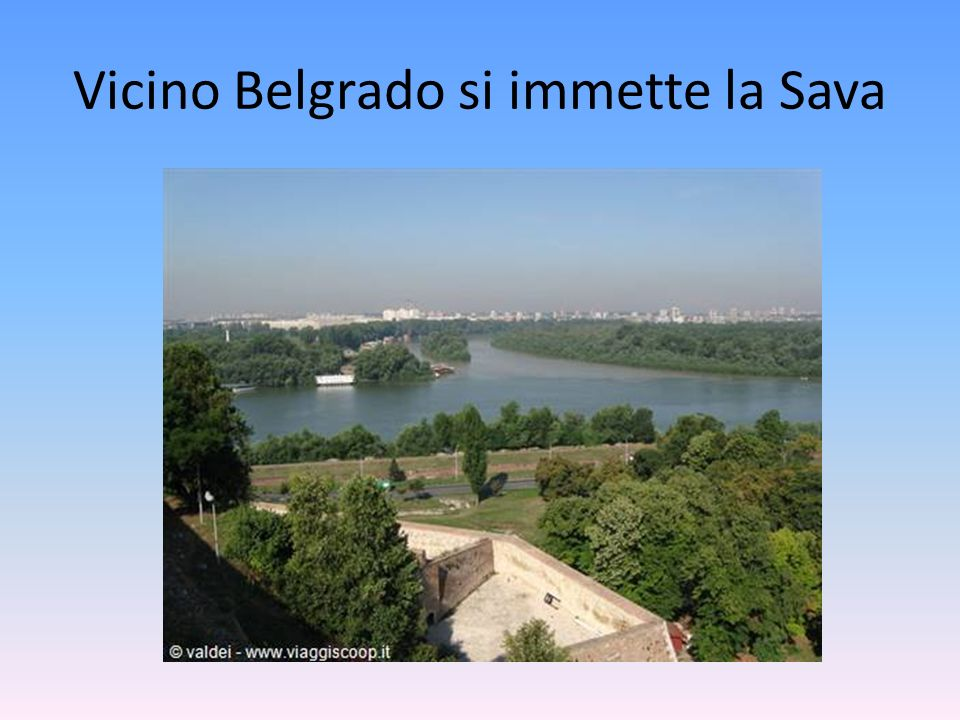 Vicino Belgrado si immette la Sava