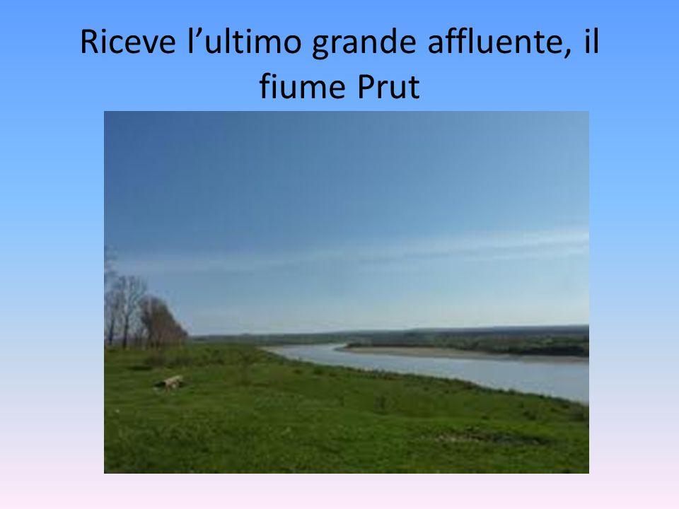 Riceve lultimo grande affluente, il fiume Prut