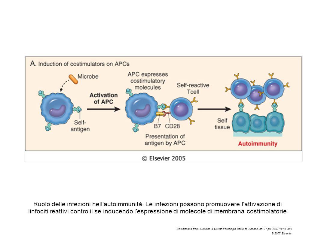 Ruolo delle infezioni nell'autoimmunità. Le infezioni possono promuovere l'attivazione di linfociti reattivi contro il se inducendo l'espressione di m