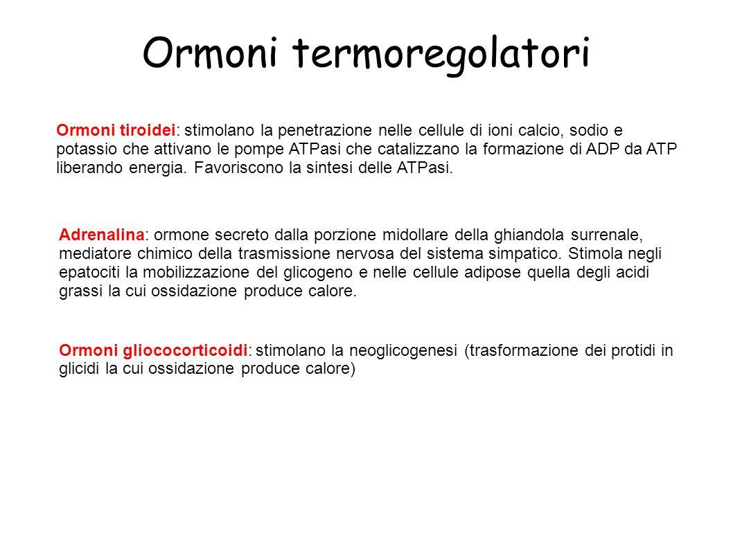Ormoni termoregolatori Ormoni tiroidei: stimolano la penetrazione nelle cellule di ioni calcio, sodio e potassio che attivano le pompe ATPasi che cata