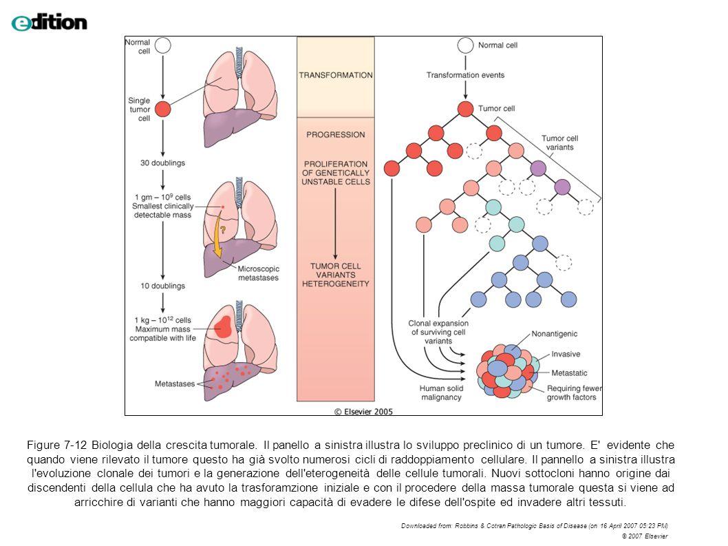 Figure 7-12 Biologia della crescita tumorale. Il panello a sinistra illustra lo sviluppo preclinico di un tumore. E' evidente che quando viene rilevat