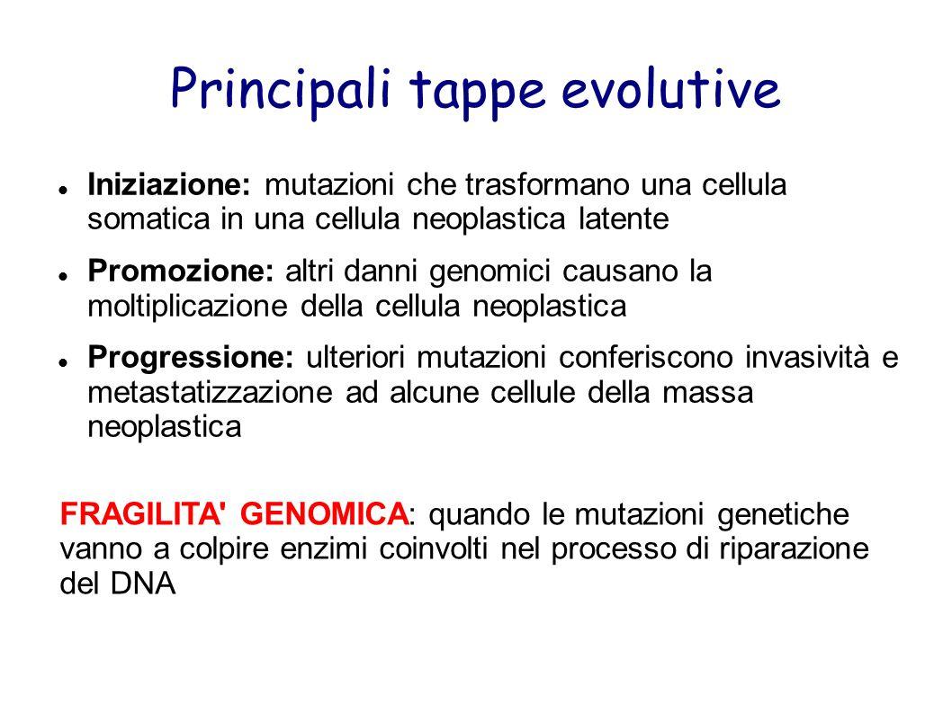 Principali tappe evolutive Iniziazione: mutazioni che trasformano una cellula somatica in una cellula neoplastica latente Promozione: altri danni geno