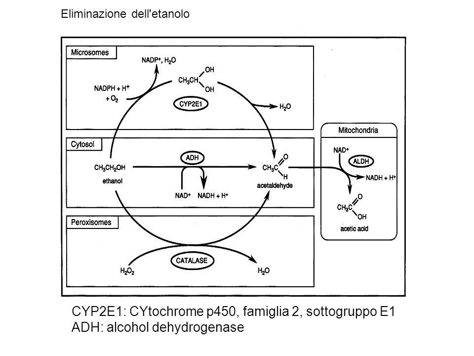 CYP2E1: CYtochrome p450, famiglia 2, sottogruppo E1 ADH: alcohol dehydrogenase Eliminazione dell etanolo