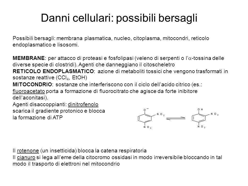 Danni cellulari: possibili bersagli Possibili bersagli: membrana plasmatica, nucleo, citoplasma, mitocondri, reticolo endoplasmatico e lisosomi.